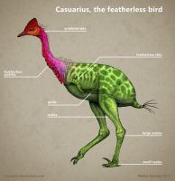 Casuarius, the featherless bird by Osmatar