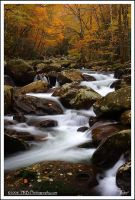 Autumn in the Smokies by TRBPhotographyLLC