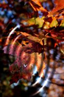 Leaf by mandypandy1980