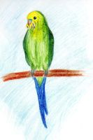 Parrot by Lapapolnoch