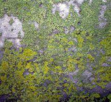 Headstone Moss 1 by PariahRisingSTOCKS