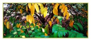 THE CHANGING COLOURS OF FALL by SRUJAL