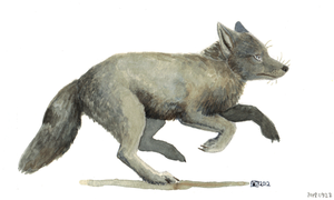 corsac fox by wiltvanc