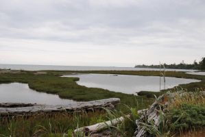 dungeness spit 2 by Makachop128