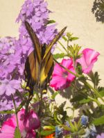 Butterfly by musicismylife2010