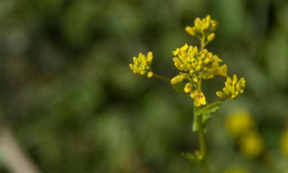 Nice yellow flower by Grahaz