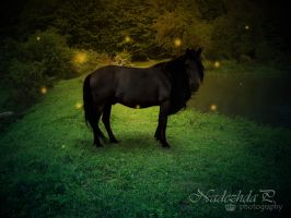 Enchanted black beauty by nuffy00