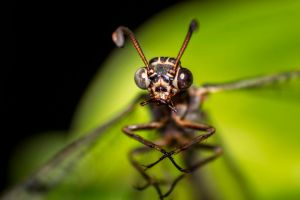 insect face by Sanka77