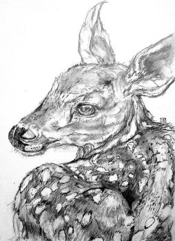 Fawn drawing final by lamelobo
