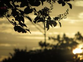 Silhouette Leaves by pickymice