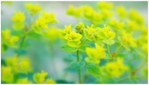 Yellow Green by duckfarm