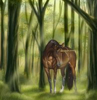 Walk in the Woods by thuvia