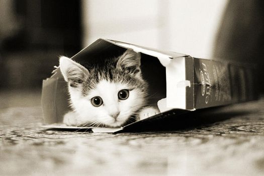 Moritz in Box by CRuS23