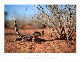 Thorny Devil by MattLauder