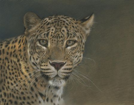 Panther : Pastel on Pastelmat paper by wimke