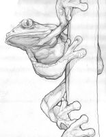 Frog2 by Blaw81