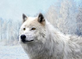 White Wolf by Kaito42