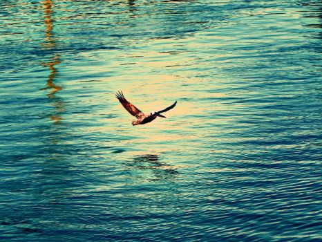 Flying Near The Water by StationAperture
