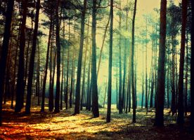 vintage forest by BaxiaArt