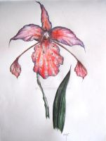 Orchid by Lijah