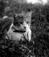 The cat 39 by glad2626