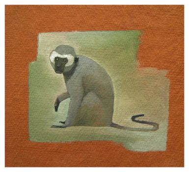 AZ_Vervet Monkey by Duffzilla