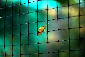 Bug On The Net by fall321
