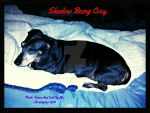 Shadow Being Cozy: In Studio Frame by HomeOfBluAndshadows