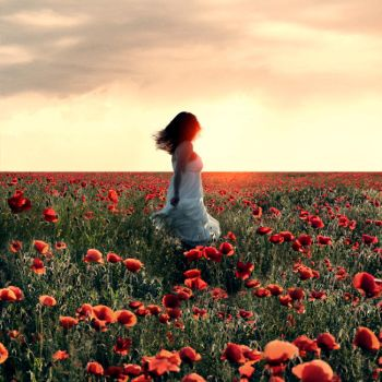 poppy field by photoflake