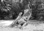 LAND ART-people in nature by tamas kanya by tom-tom1969