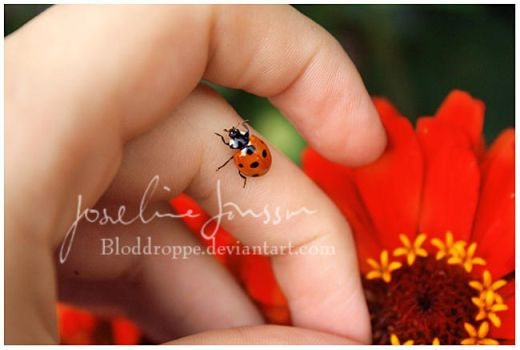 Ladybird I by Bloddroppe-nature