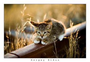 Nothing Escapes His Eye... by sergey1984