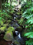 Moss Rock Waterfall by bloomingvinedesign