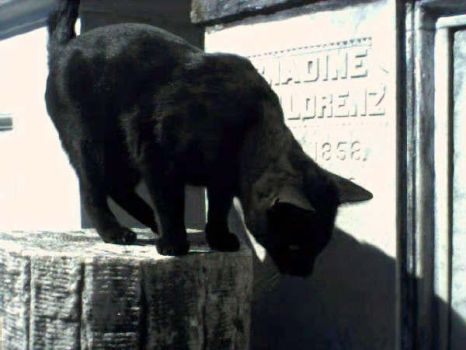 Nahnay (The Cemetery Cat) by Sean-Matthew