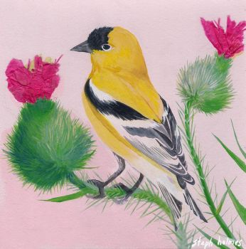 American Goldfinch by StephHolmes