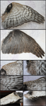 Sparrowhawk Wing by CheeTaxi