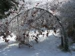 Winter Scape040 by effing-stock