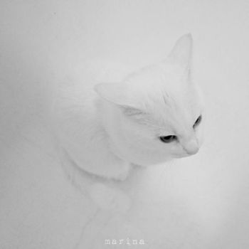 The Return of the Invisible Cat by MarinaCoric