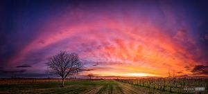 A sunset with grapes by NorbertKocsis