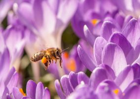 Busy Bee by enaruna