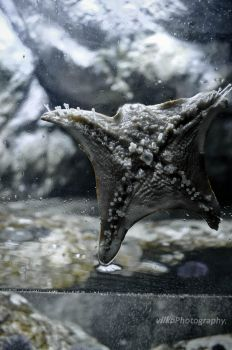 starfish by vilkoPhotography