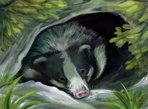 Hog Badger by animalartist16