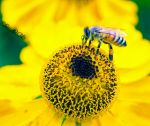Busy Bee by bexa