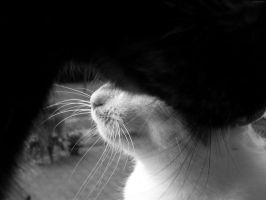 black and white cat by LadyLennox