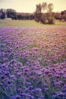 Violet Meadow by caryca91