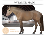 AEC School Horse - WE Tailor Made (LEASED) by Ackerley