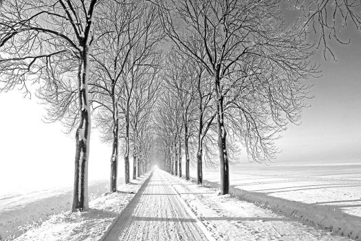 Its a white white world.. by Betuwefotograaf