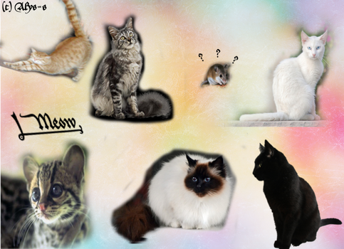 Cat Collage by Alys-s