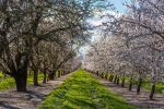 Orchard by NBrownPhotography