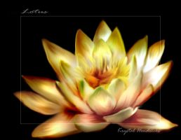 Lotus by Sharia